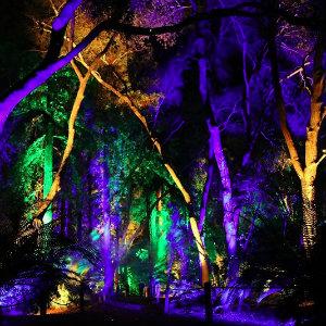 Enchanted Forest Of Light Descanso Gardens December 21